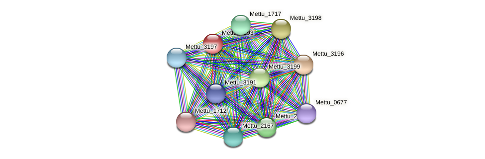 Mettu_3193 protein (Methylobacter tundripaludum) - STRING interaction network