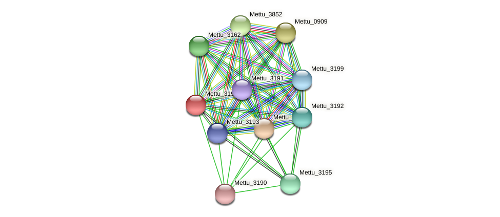 Mettu_3194 protein (Methylobacter tundripaludum) - STRING interaction network