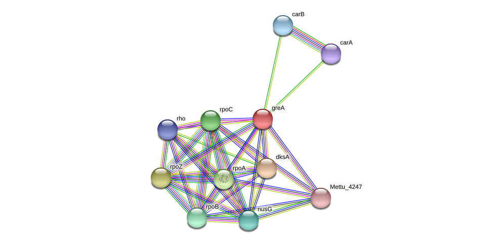 greA protein (Methylobacter tundripaludum) - STRING interaction network
