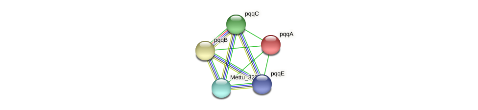 pqqA protein (Methylobacter tundripaludum) - STRING interaction network