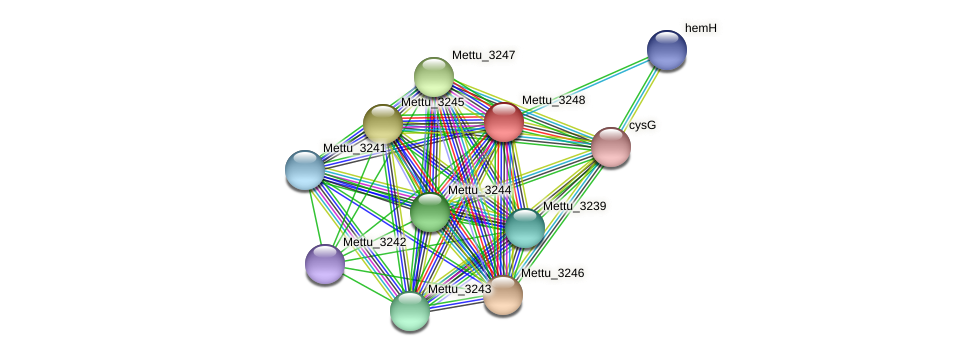 Mettu_3248 protein (Methylobacter tundripaludum) - STRING interaction network
