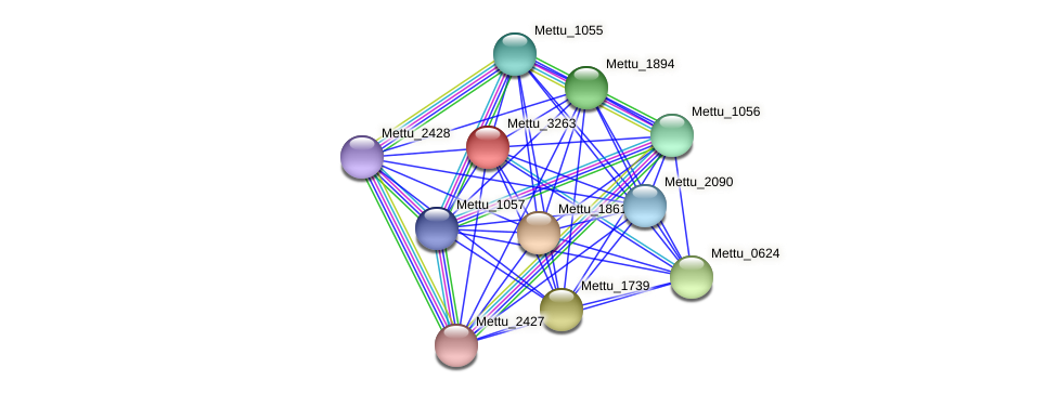 Mettu_3263 protein (Methylobacter tundripaludum) - STRING interaction network