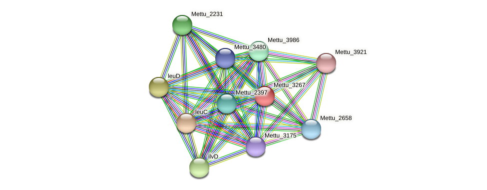 Mettu_3267 protein (Methylobacter tundripaludum) - STRING interaction network