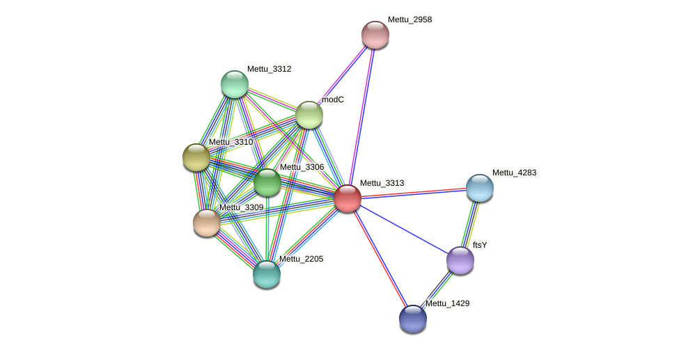 Mettu_3313 protein (Methylobacter tundripaludum) - STRING interaction network