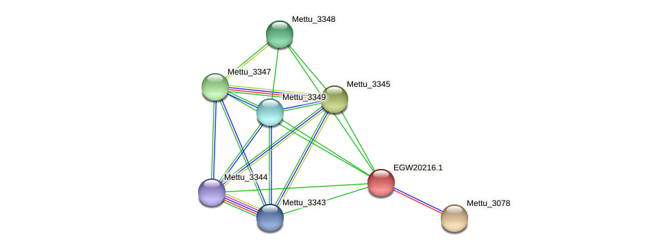 Mettu_3346 protein (Methylobacter tundripaludum) - STRING interaction network