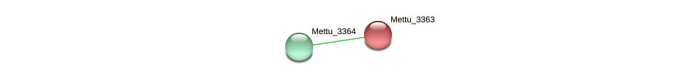 Mettu_3363 protein (Methylobacter tundripaludum) - STRING interaction network
