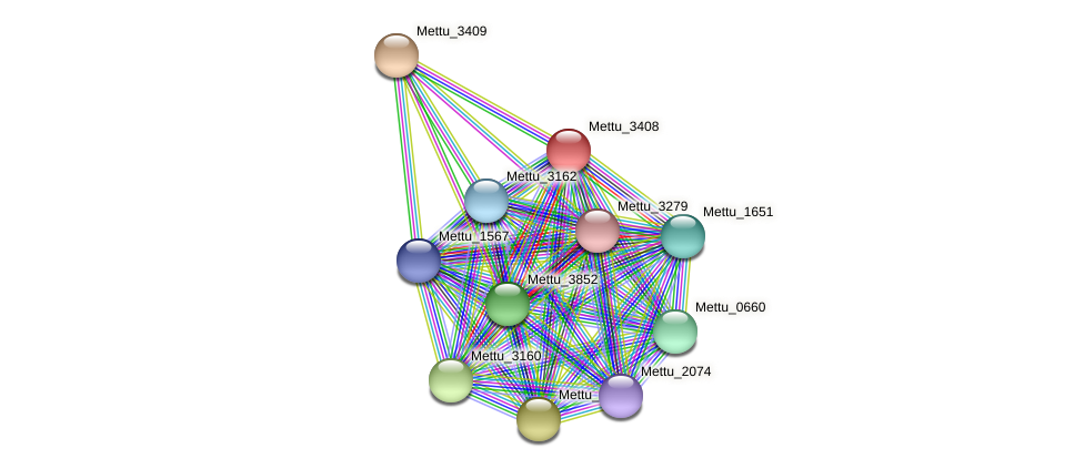 Mettu_3408 protein (Methylobacter tundripaludum) - STRING interaction network