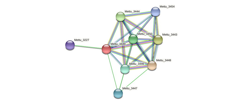 Mettu_3449 protein (Methylobacter tundripaludum) - STRING interaction network