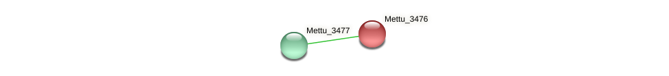 Mettu_3476 protein (Methylobacter tundripaludum) - STRING interaction network