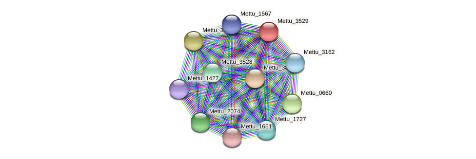 Mettu_3529 protein (Methylobacter tundripaludum) - STRING interaction network