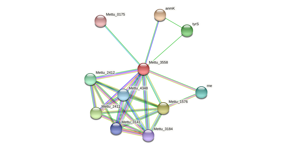 Mettu_3558 protein (Methylobacter tundripaludum) - STRING interaction network