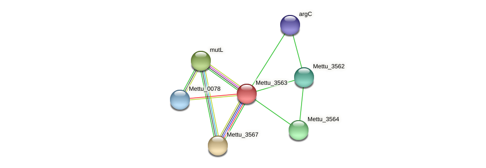 Mettu_3563 protein (Methylobacter tundripaludum) - STRING interaction network