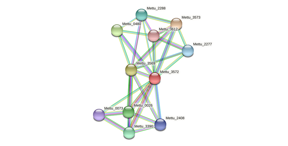 Mettu_3572 protein (Methylobacter tundripaludum) - STRING interaction network