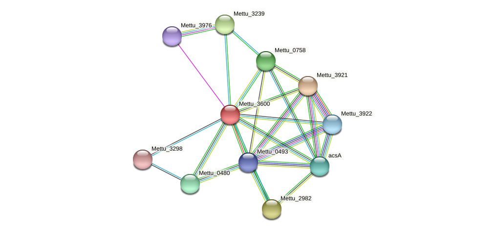 Mettu_3600 protein (Methylobacter tundripaludum) - STRING interaction network