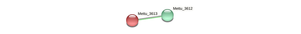 Mettu_3613 protein (Methylobacter tundripaludum) - STRING interaction network
