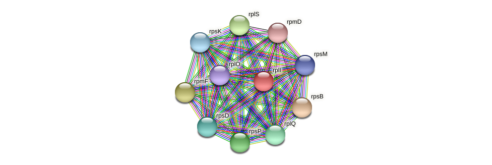 rplI protein (Methylobacter tundripaludum) - STRING interaction network