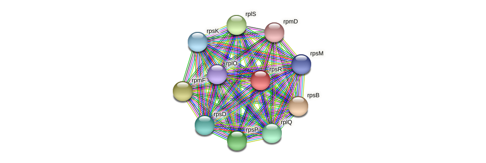 rpsR protein (Methylobacter tundripaludum) - STRING interaction network
