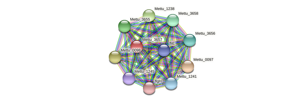 Mettu_3657 protein (Methylobacter tundripaludum) - STRING interaction network