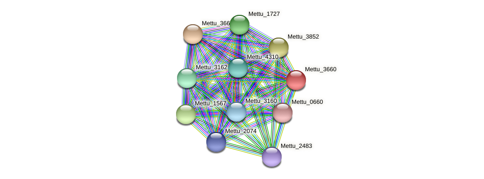 Mettu_3660 protein (Methylobacter tundripaludum) - STRING interaction network