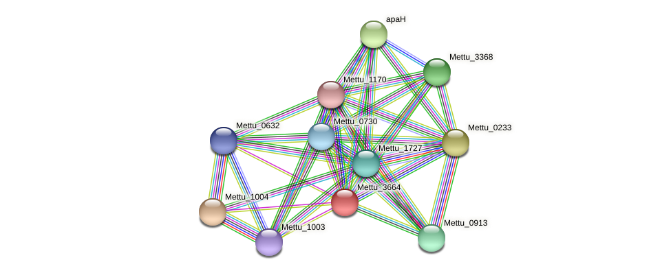 Mettu_3664 protein (Methylobacter tundripaludum) - STRING interaction network