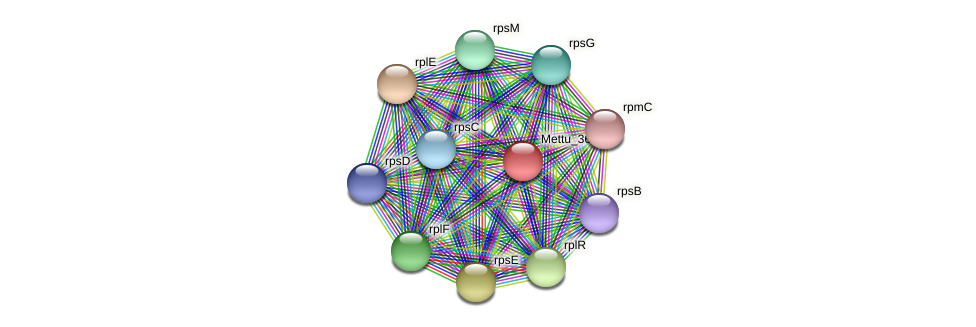 Mettu_3668 protein (Methylobacter tundripaludum) - STRING interaction network