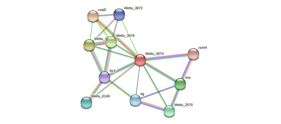 Mettu_3674 protein (Methylobacter tundripaludum) - STRING interaction network