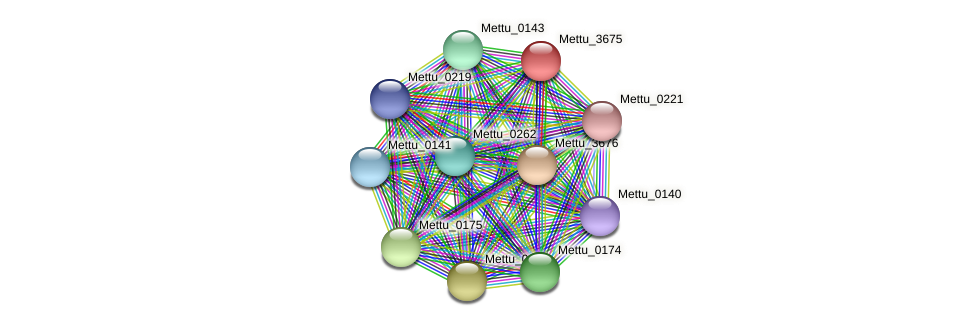Mettu_3675 protein (Methylobacter tundripaludum) - STRING interaction network