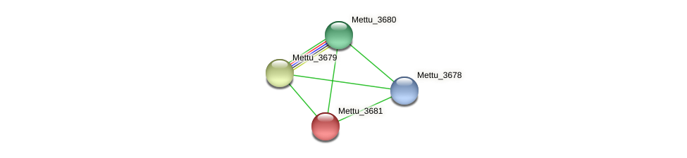 Mettu_3681 protein (Methylobacter tundripaludum) - STRING interaction network