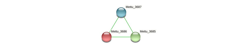 Mettu_3686 protein (Methylobacter tundripaludum) - STRING interaction network