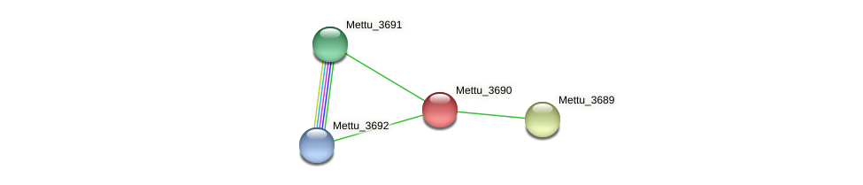 Mettu_3690 protein (Methylobacter tundripaludum) - STRING interaction network