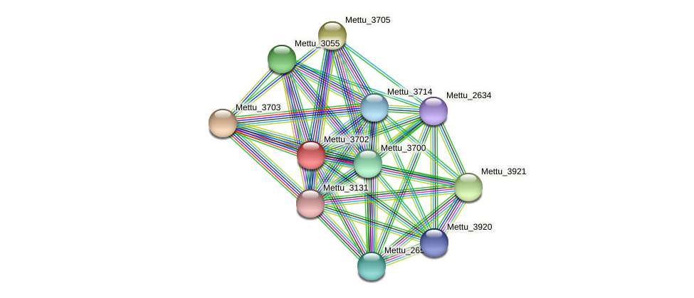 Mettu_3702 protein (Methylobacter tundripaludum) - STRING interaction network