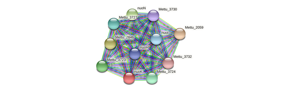 nuoK protein (Methylobacter tundripaludum) - STRING interaction network
