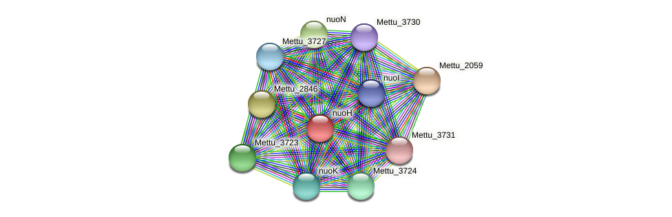 nuoH protein (Methylobacter tundripaludum) - STRING interaction network