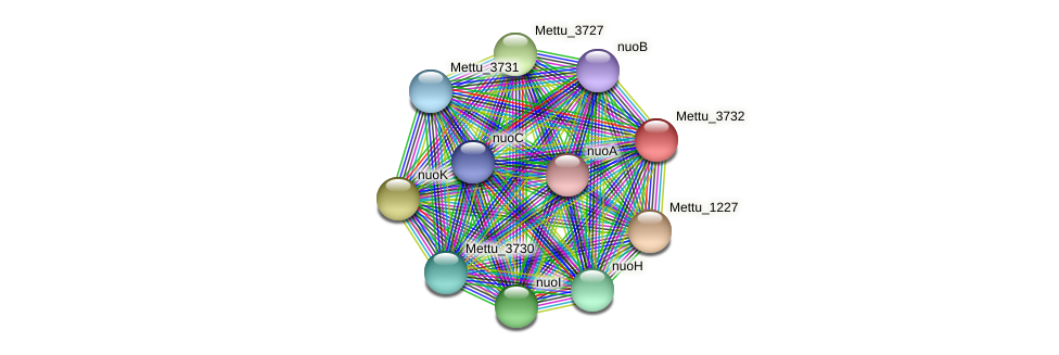 Mettu_3732 protein (Methylobacter tundripaludum) - STRING interaction network