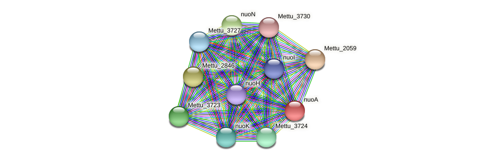 nuoA protein (Methylobacter tundripaludum) - STRING interaction network
