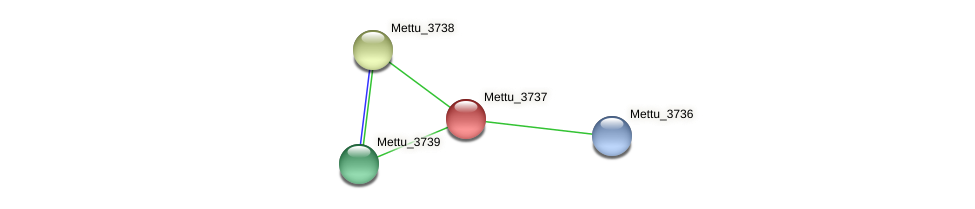 Mettu_3737 protein (Methylobacter tundripaludum) - STRING interaction network