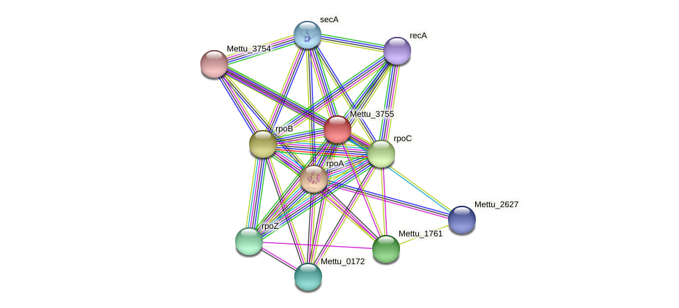 Mettu_3755 protein (Methylobacter tundripaludum) - STRING interaction network