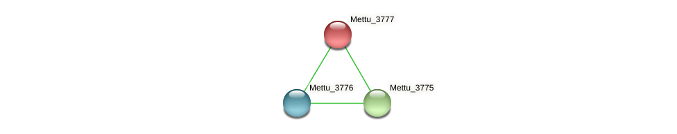 Mettu_3777 protein (Methylobacter tundripaludum) - STRING interaction network