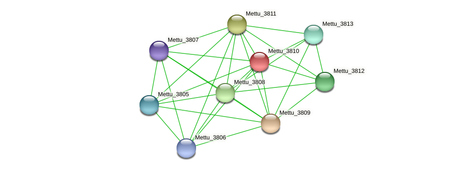 Mettu_3810 protein (Methylobacter tundripaludum) - STRING interaction network