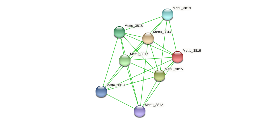 Mettu_3816 protein (Methylobacter tundripaludum) - STRING interaction network