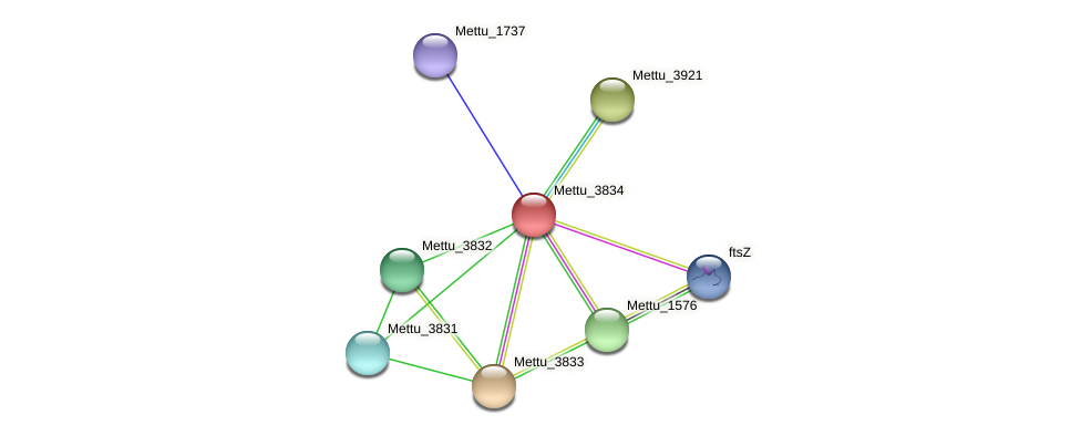 Mettu_3834 protein (Methylobacter tundripaludum) - STRING interaction network