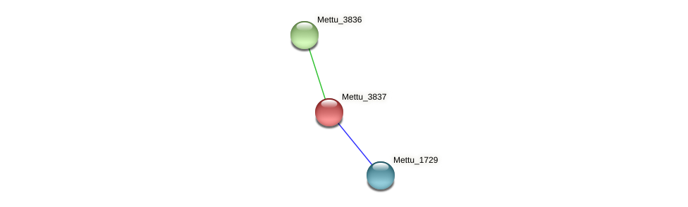 Mettu_3837 protein (Methylobacter tundripaludum) - STRING interaction network