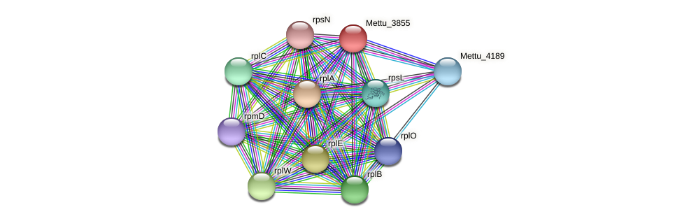 Mettu_3855 protein (Methylobacter tundripaludum) - STRING interaction network