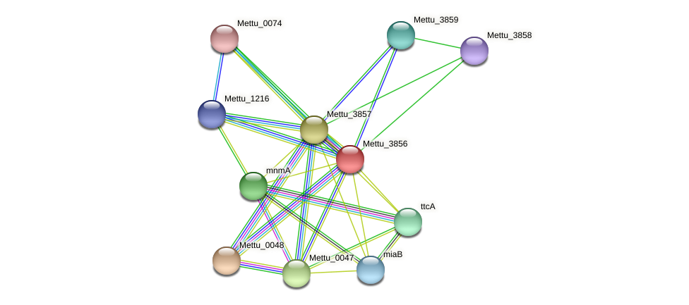 Mettu_3856 protein (Methylobacter tundripaludum) - STRING interaction network