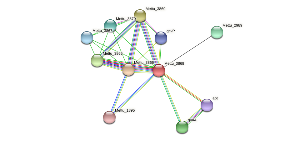 Mettu_3868 protein (Methylobacter tundripaludum) - STRING interaction network