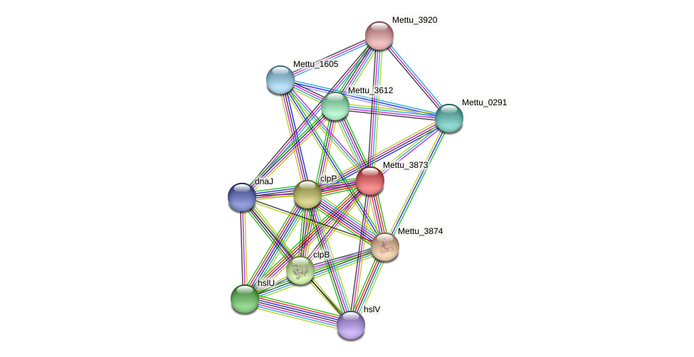 Mettu_3873 protein (Methylobacter tundripaludum) - STRING interaction network
