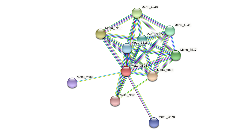 Mettu_3894 protein (Methylobacter tundripaludum) - STRING interaction network
