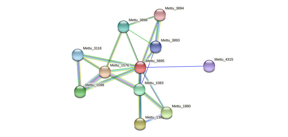 Mettu_3895 protein (Methylobacter tundripaludum) - STRING interaction network