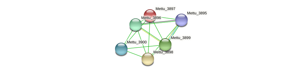 Mettu_3897 protein (Methylobacter tundripaludum) - STRING interaction network