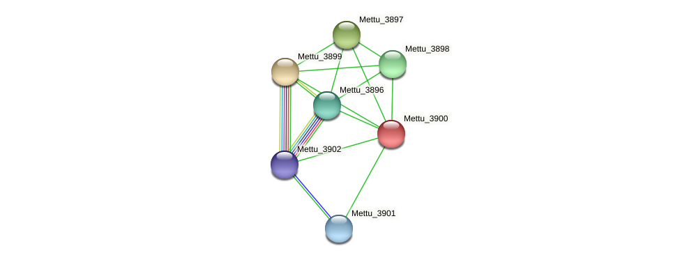 Mettu_3900 protein (Methylobacter tundripaludum) - STRING interaction network